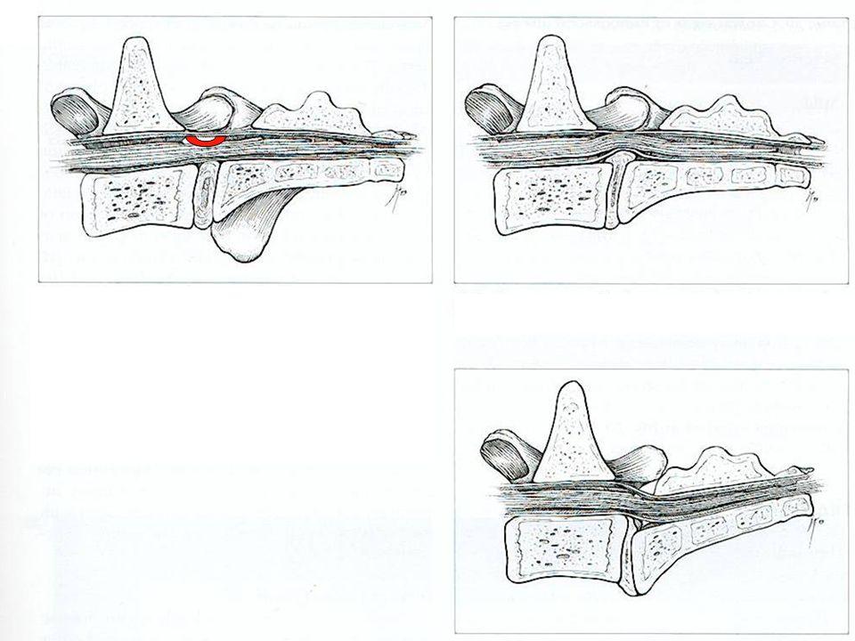 Illustrazioni pag 123 Wheeler + Marco pag 274