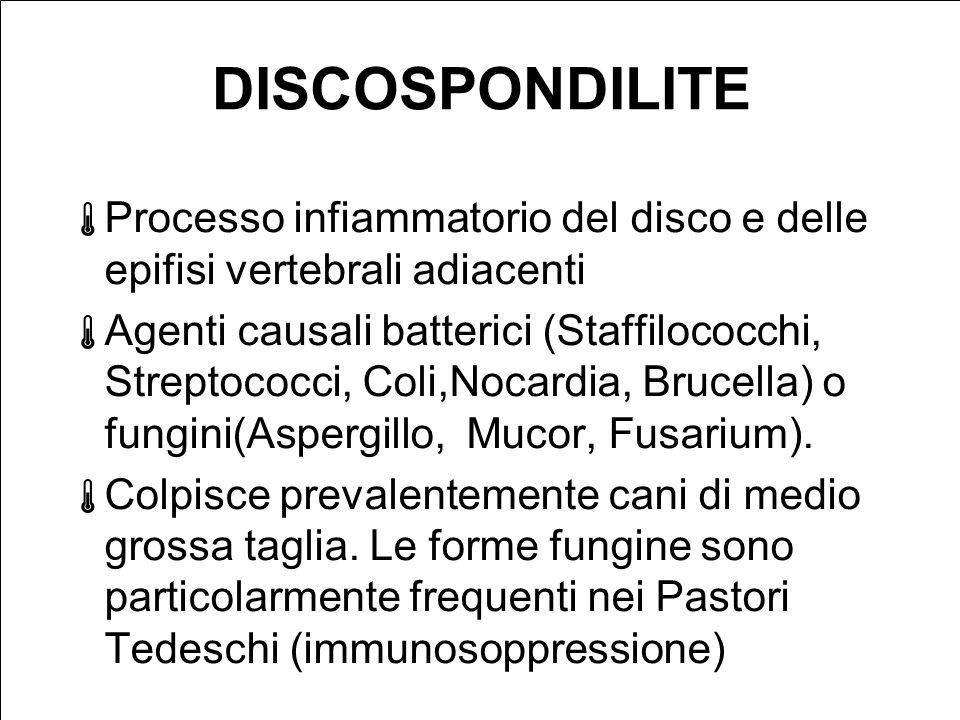 DISCOSPONDILITE Processo infiammatorio del disco e delle epifisi vertebrali adiacenti Agenti causali batterici (Staffilococchi, Streptococci, Coli,Nocardia, Brucella) o fungini(Aspergillo, Mucor, Fusarium).