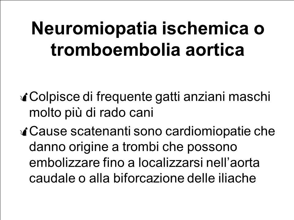 Neuromiopatia ischemica o tromboembolia aortica Colpisce di frequente gatti anziani maschi molto più di rado cani Cause scatenanti sono cardiomiopatie che danno origine a trombi che possono embolizzare fino a localizzarsi nellaorta caudale o alla biforcazione delle iliache