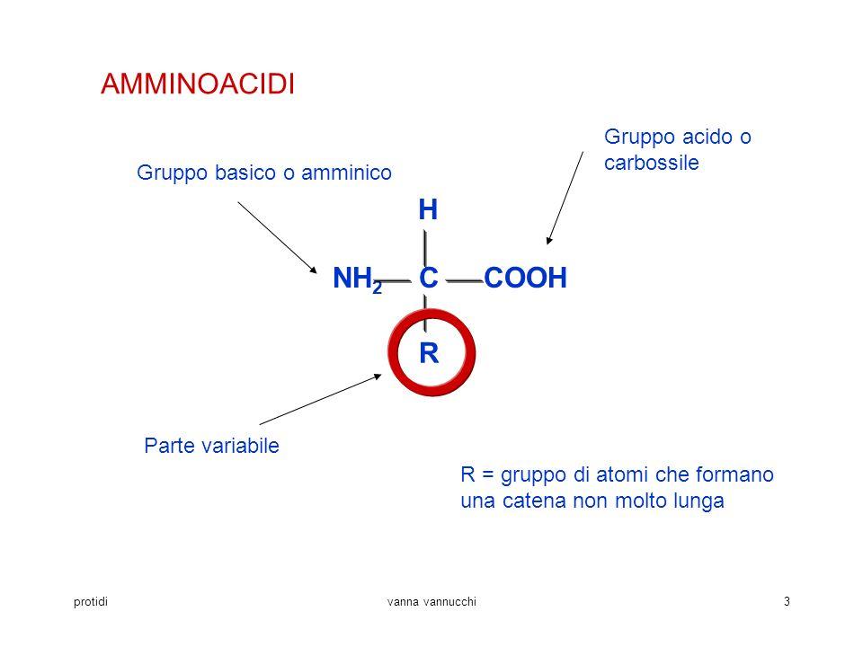 protidivanna vannucchi3 AMMINOACIDI COOH H NH 2 C R Parte variabile Gruppo acido o carbossile Gruppo basico o amminico R = gruppo di atomi che formano