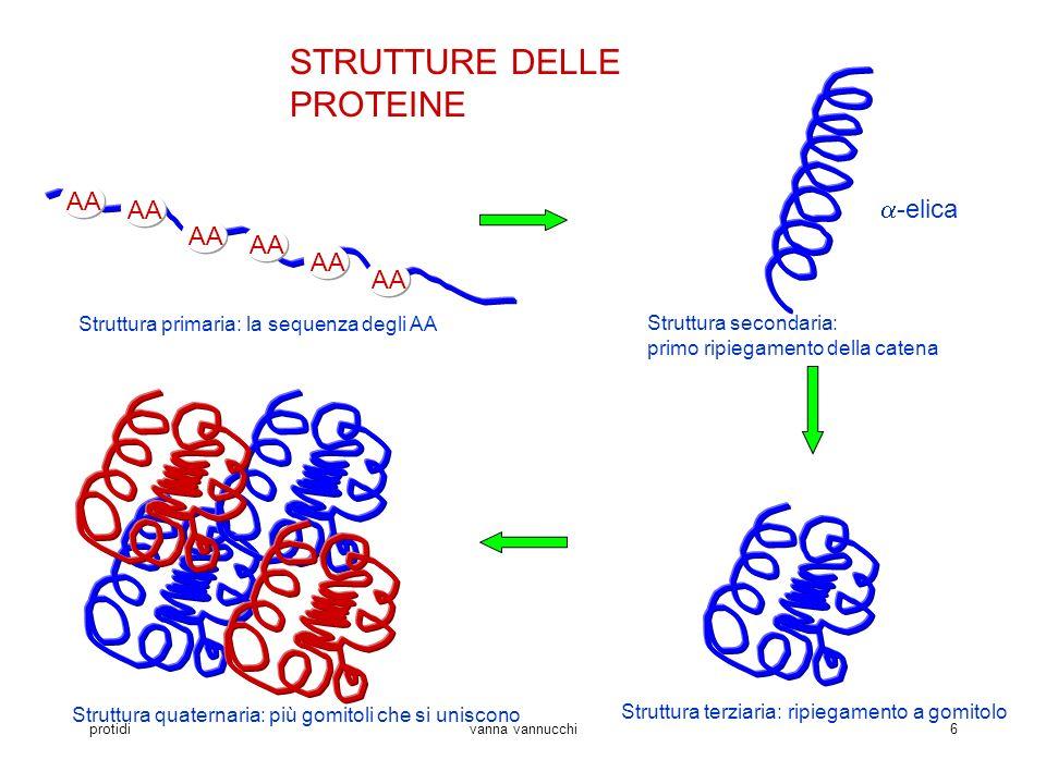 protidivanna vannucchi6 STRUTTURE DELLE PROTEINE AA Struttura primaria: la sequenza degli AA Struttura secondaria: primo ripiegamento della catena -el