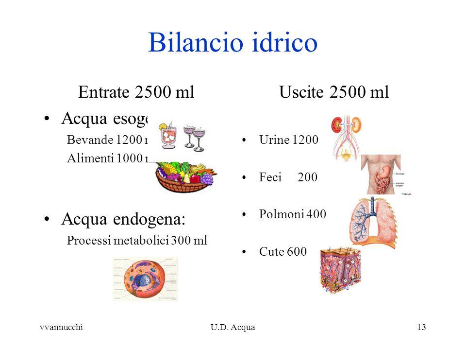 vvannucchiU.D. Acqua13 Entrate 2500 ml Acqua esogena: Bevande 1200 ml Alimenti 1000 ml Acqua endogena: Processi metabolici 300 ml Bilancio idrico Usci
