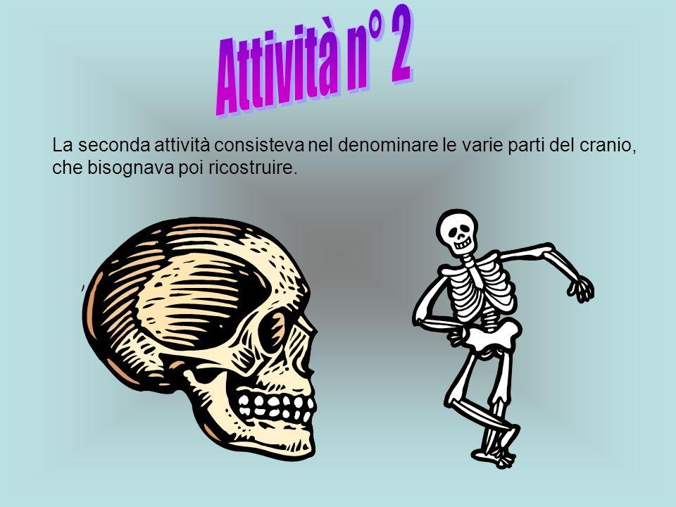La seconda attività consisteva nel denominare le varie parti del cranio, che bisognava poi ricostruire.