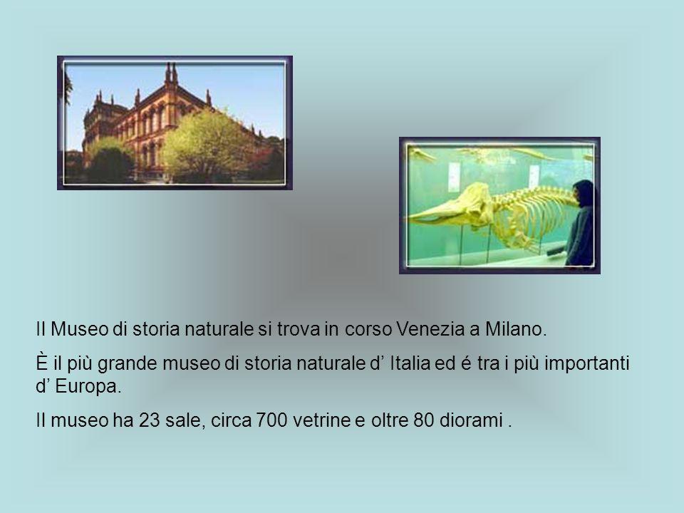 Il Museo di storia naturale si trova in corso Venezia a Milano. È il più grande museo di storia naturale d Italia ed é tra i più importanti d Europa.