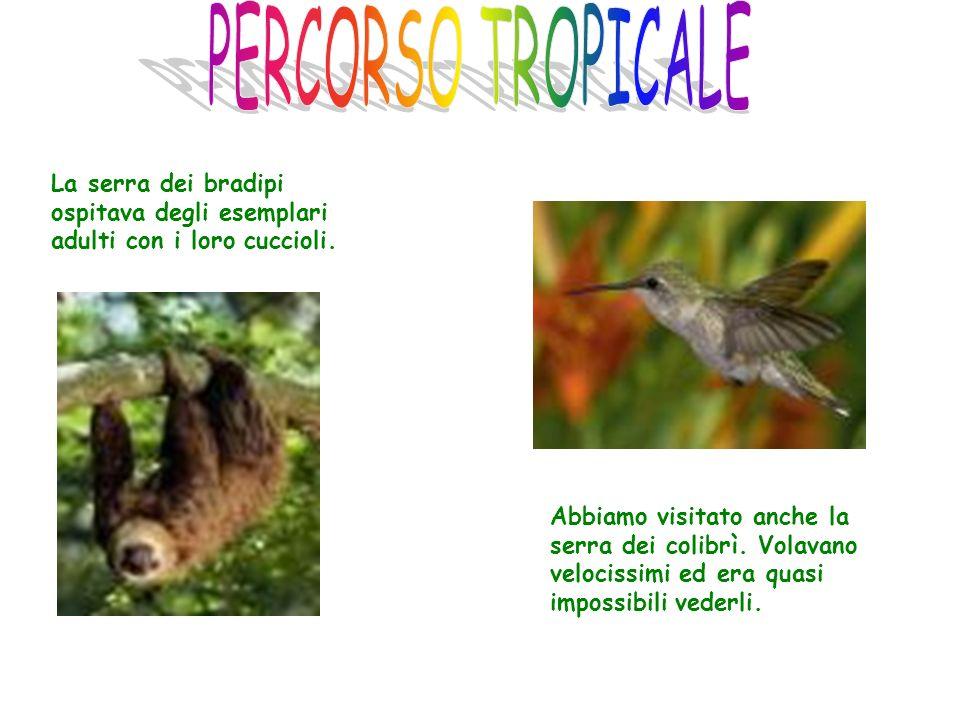 La serra dei bradipi ospitava degli esemplari adulti con i loro cuccioli. Abbiamo visitato anche la serra dei colibrì. Volavano velocissimi ed era qua