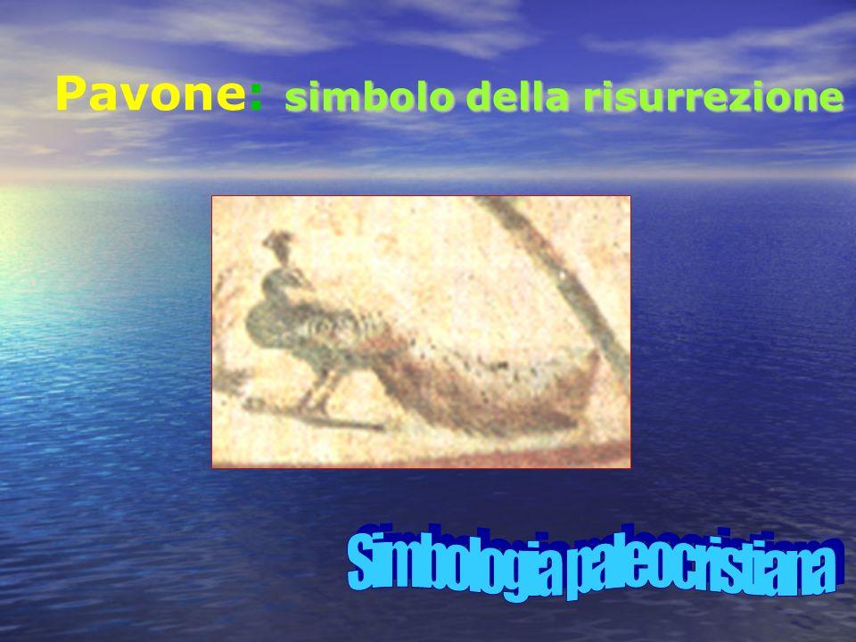 simbolo della risurrezione Pavone: simbolo della risurrezione
