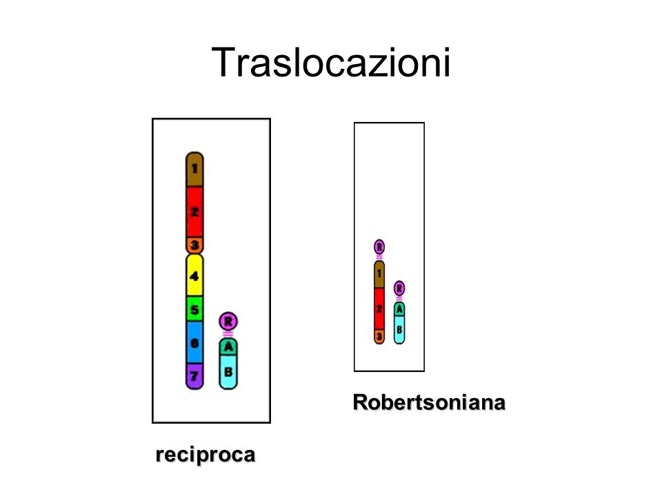 Traslocazioni reciproca Robertsoniana