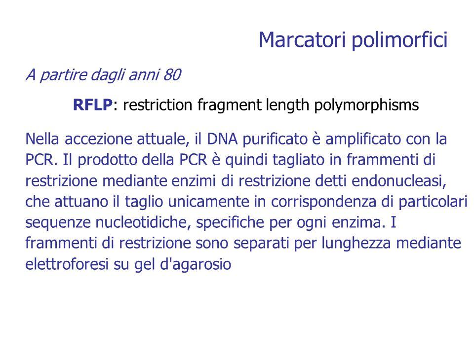 Marcatori polimorfici A partire dagli anni 80 RFLP: restriction fragment length polymorphisms Nella accezione attuale, il DNA purificato è amplificato