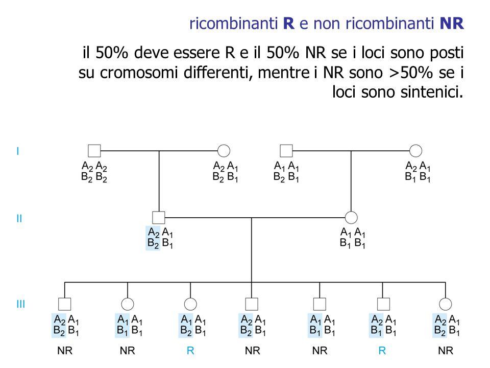 ricombinanti R e non ricombinanti NR il 50% deve essere R e il 50% NR se i loci sono posti su cromosomi differenti, mentre i NR sono >50% se i loci so