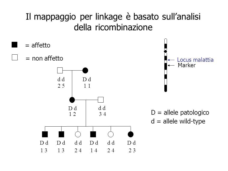 Il mappaggio per linkage è basato sullanalisi della ricombinazione d D d d 2 51 1 23 4 1 3 1 3 2 4 1 4 2 4 2 3 = affetto = non affetto D = allele pato