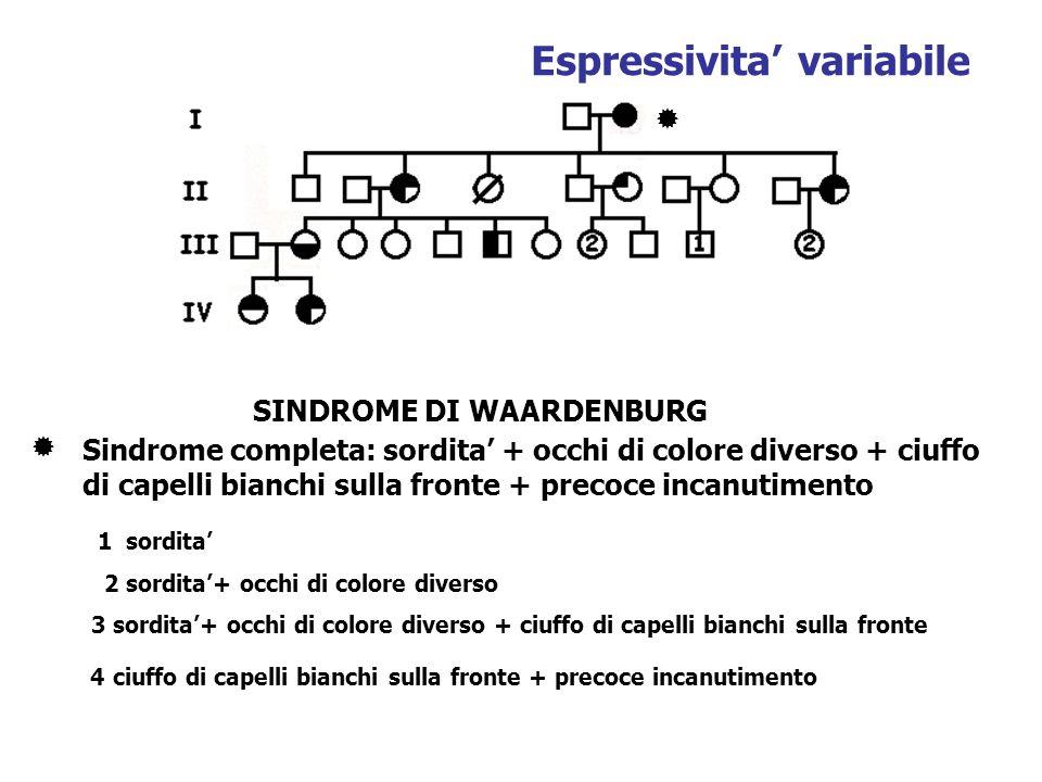 SINDROME DI WAARDENBURG Sindrome completa: sordita + occhi di colore diverso + ciuffo di capelli bianchi sulla fronte + precoce incanutimento 1 sordit