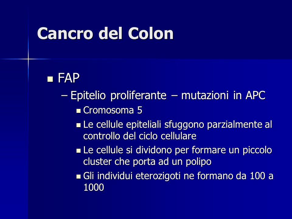 Cancro del Colon FAP FAP –Epitelio proliferante – mutazioni in APC Cromosoma 5 Cromosoma 5 Le cellule epiteliali sfuggono parzialmente al controllo de
