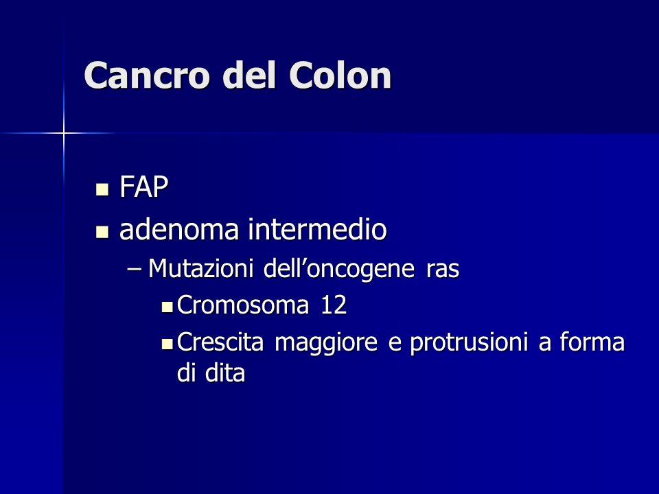 Cancro del Colon FAP FAP adenoma intermedio adenoma intermedio –Mutazioni delloncogene ras Cromosoma 12 Cromosoma 12 Crescita maggiore e protrusioni a