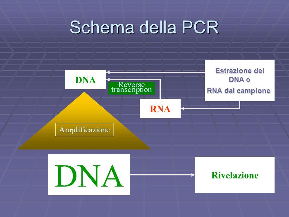 Schema della PCR DNA RNA DNA Estrazione del DNA o DNA o RNA dal campione Rivelazione Amplificazione Reverse transcription