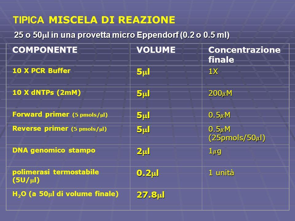 COMPONENTEVOLUMEConcentrazione finale 10 X PCR Buffer 5l1X 10 X dNTPs (2mM) 5l 200M Forward primer (5 pmols/l) 5l 0.5M Reverse primer (5 pmols/l) 5l 0