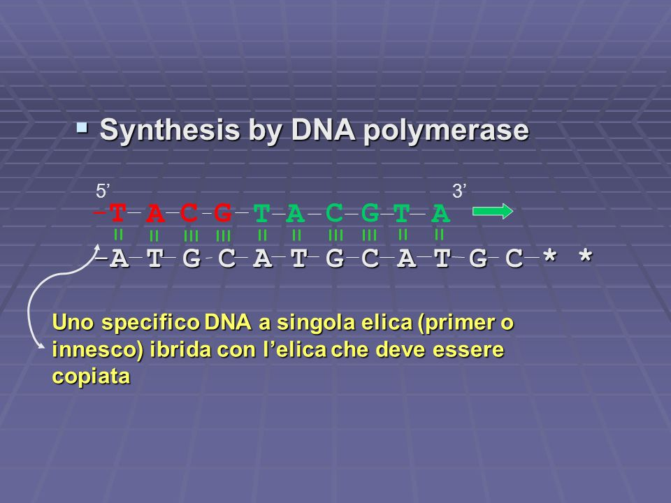 Synthesis by DNA polymerase Synthesis by DNA polymerase -A T G C A T G C A T G C * * -A T G C A T G C A T G C * * TACGTA ACG-T-T 53 Uno specifico DNA a singola elica (primer o innesco) ibrida con lelica che deve essere copiata