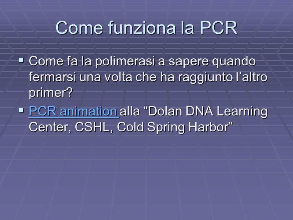 Come funziona la PCR Come fa la polimerasi a sapere quando fermarsi una volta che ha raggiunto laltro primer? Come fa la polimerasi a sapere quando fe