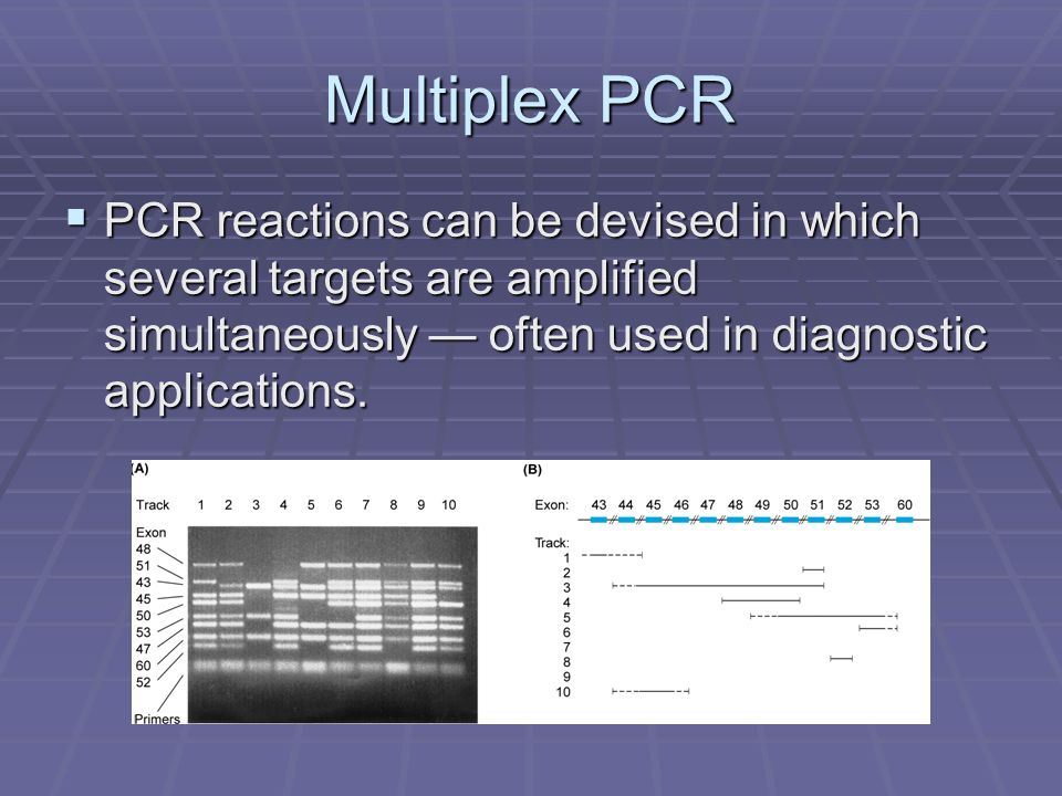 Multiplex PCR PCR reactions can be devised in which several targets are amplified simultaneously often used in diagnostic applications.