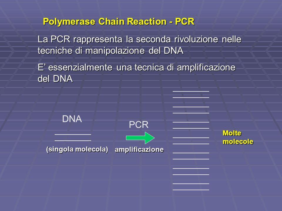 Polymerase Chain Reaction - PCR La PCR rappresenta la seconda rivoluzione nelle tecniche di manipolazione del DNA E essenzialmente una tecnica di ampl