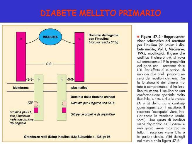 Figura 47.5 - Rappresentazione schematica del recettore per l insulina. DIABETE MELLITO PRIMARIO