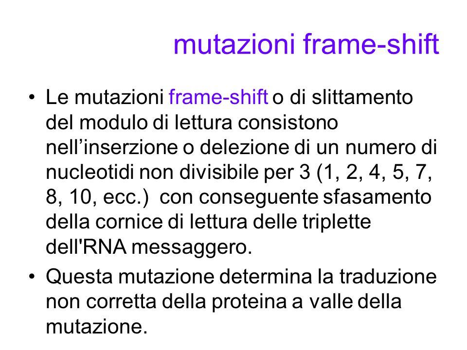 mutazioni frame-shift Le mutazioni frame-shift o di slittamento del modulo di lettura consistono nellinserzione o delezione di un numero di nucleotidi non divisibile per 3 (1, 2, 4, 5, 7, 8, 10, ecc.) con conseguente sfasamento della cornice di lettura delle triplette dell RNA messaggero.