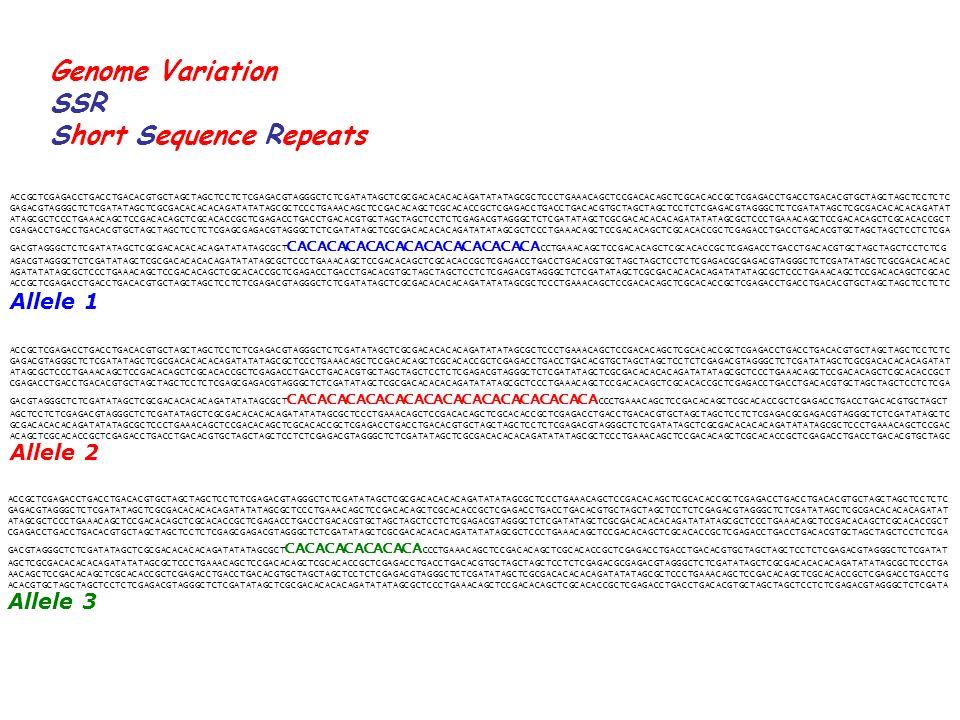 Genome Variation SSR Short Sequence Repeats ACCGCTCGAGACCTGACCTGACACGTGCTAGCTAGCTCCTCTCGAGACGTAGGGCTCTCGATATAGCTCGCGACACACACAGATATATAGCGCTCCCTGAAACAGCTCCGACACAGCTCGCACACCGCTCGAGACCTGACCTGACACGTGCTAGCTAGCTCCTCTC GAGACGTAGGGCTCTCGATATAGCTCGCGACACACACAGATATATAGCGCTCCCTGAAACAGCTCCGACACAGCTCGCACACCGCTCGAGACCTGACCTGACACGTGCTAGCTAGCTCCTCTCGAGACGTAGGGCTCTCGATATAGCTCGCGACACACACAGATAT ATAGCGCTCCCTGAAACAGCTCCGACACAGCTCGCACACCGCTCGAGACCTGACCTGACACGTGCTAGCTAGCTCCTCTCGAGACGTAGGGCTCTCGATATAGCTCGCGACACACACAGATATATAGCGCTCCCTGAAACAGCTCCGACACAGCTCGCACACCGCT CGAGACCTGACCTGACACGTGCTAGCTAGCTCCTCTCGAGCGAGACGTAGGGCTCTCGATATAGCTCGCGACACACACAGATATATAGCGCTCCCTGAAACAGCTCCGACACAGCTCGCACACCGCTCGAGACCTGACCTGACACGTGCTAGCTAGCTCCTCTCGA GACGTAGGGCTCTCGATATAGCTCGCGACACACACAGATATATAGCGCT CACACACACACACACACACACACACA CCTGAAACAGCTCCGACACAGCTCGCACACCGCTCGAGACCTGACCTGACACGTGCTAGCTAGCTCCTCTCG AGACGTAGGGCTCTCGATATAGCTCGCGACACACACAGATATATAGCGCTCCCTGAAACAGCTCCGACACAGCTCGCACACCGCTCGAGACCTGACCTGACACGTGCTAGCTAGCTCCTCTCGAGACGCGAGACGTAGGGCTCTCGATATAGCTCGCGACACACAC AGATATATAGCGCTCCCTGAAACAGCTCCGACACAGCTCGCACACCGCTCGAGACCTGACCTGACACGTGCTAGCTAGCTCCTCTCGAGACGTAGGGCTCTCGATATAGCTCGCGACACACACAGATATATAGCGCTCCCTGAAACAGCTCCGACACAGCTCGCAC ACCGCTCGAGACCTGACCTGACACGTGCTAGCTAGCTCCTCTCGAGACGTAGGGCTCTCGATATAGCTCGCGACACACACAGATATATAGCGCTCCCTGAAACAGCTCCGACACAGCTCGCACACCGCTCGAGACCTGACCTGACACGTGCTAGCTAGCTCCTCTC ACCGCTCGAGACCTGACCTGACACGTGCTAGCTAGCTCCTCTCGAGACGTAGGGCTCTCGATATAGCTCGCGACACACACAGATATATAGCGCTCCCTGAAACAGCTCCGACACAGCTCGCACACCGCTCGAGACCTGACCTGACACGTGCTAGCTAGCTCCTCTC GAGACGTAGGGCTCTCGATATAGCTCGCGACACACACAGATATATAGCGCTCCCTGAAACAGCTCCGACACAGCTCGCACACCGCTCGAGACCTGACCTGACACGTGCTAGCTAGCTCCTCTCGAGACGTAGGGCTCTCGATATAGCTCGCGACACACACAGATAT ATAGCGCTCCCTGAAACAGCTCCGACACAGCTCGCACACCGCTCGAGACCTGACCTGACACGTGCTAGCTAGCTCCTCTCGAGACGTAGGGCTCTCGATATAGCTCGCGACACACACAGATATATAGCGCTCCCTGAAACAGCTCCGACACAGCTCGCACACCGCT CGAGACCTGACCTGACACGTGCTAGCTAGCTCCTCTCGAGCGAGACGTAGGGCTCTCGATATAGCTCGCGACACACACAGATATATAGCGCTCCCTGAAACAGCTCCGACACAGCTCGCACACCGCTCGAGACCTG