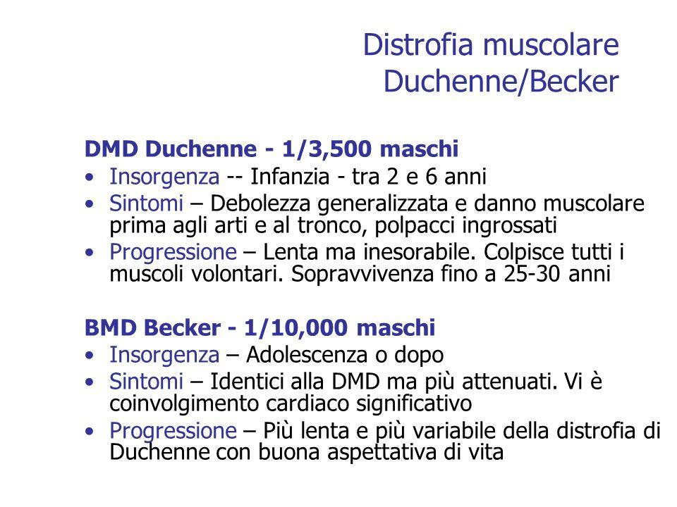 Distrofia muscolare Duchenne/Becker DMD Duchenne - 1/3,500 maschi Insorgenza -- Infanzia - tra 2 e 6 anni Sintomi – Debolezza generalizzata e danno muscolare prima agli arti e al tronco, polpacci ingrossati Progressione – Lenta ma inesorabile.