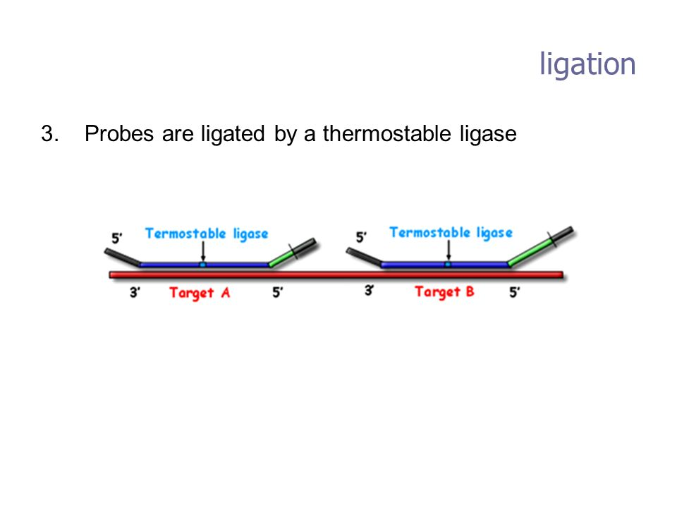 ligation 3. Probes are ligated by a thermostable ligase