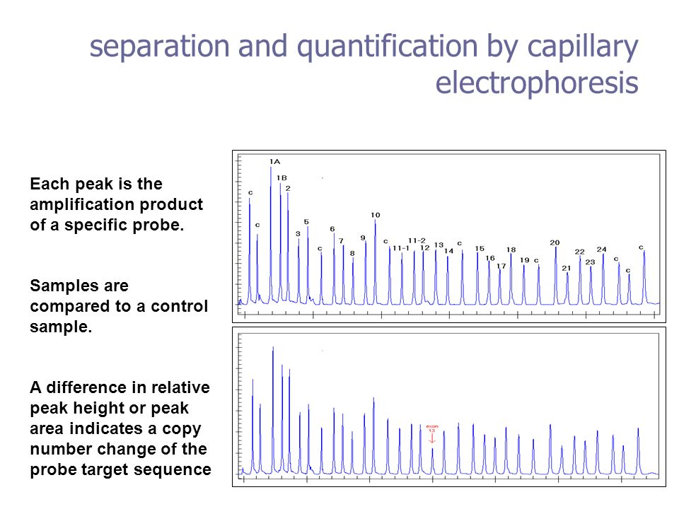 separation and quantification by capillary electrophoresis Each peak is the amplification product of a specific probe. Samples are compared to a contr