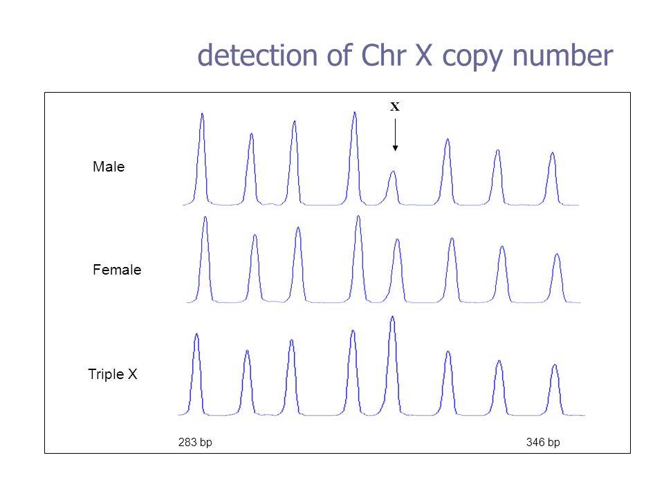 Triple X Female Male 283 bp 346 bp detection of Chr X copy number X