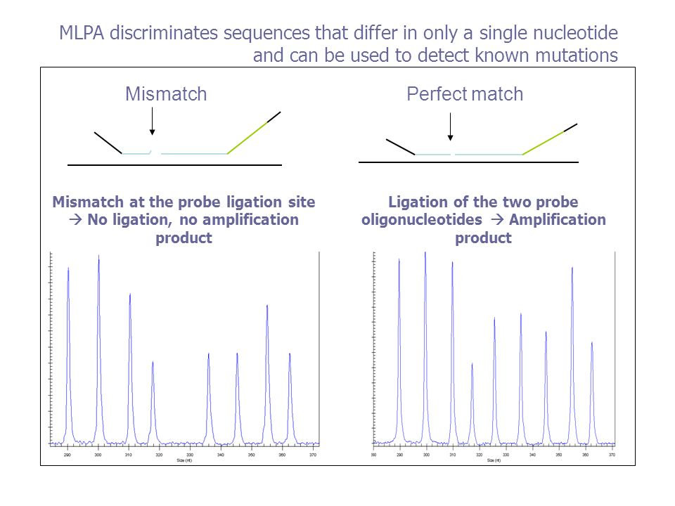 MLPA discriminates sequences that differ in only a single nucleotide and can be used to detect known mutations MismatchPerfect match Ligation of the t