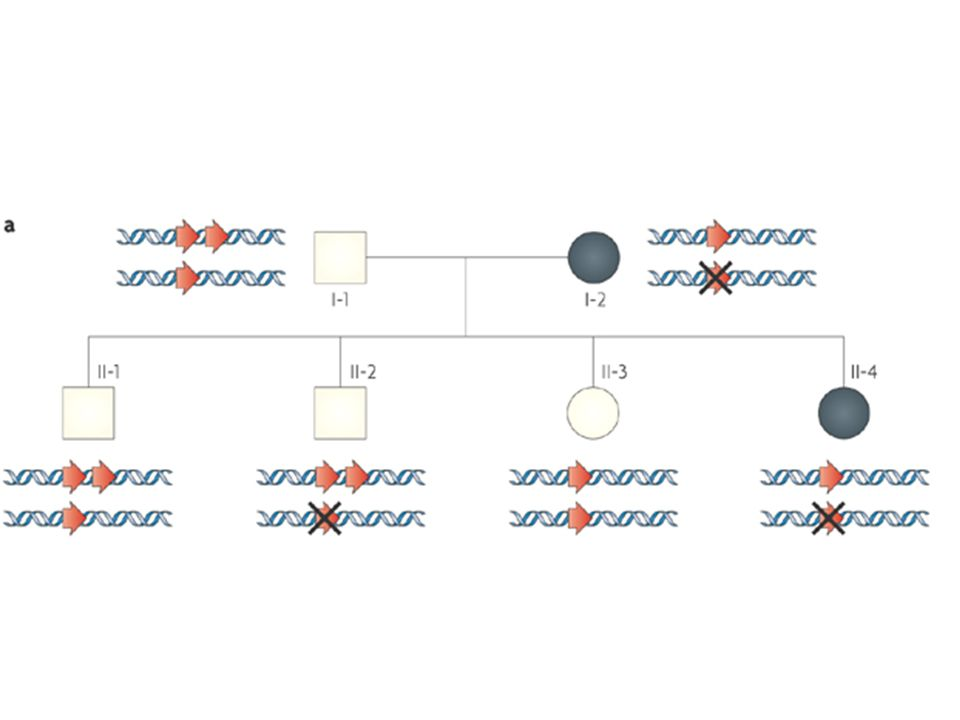 Triple X Female Male 283 bp 346 bp detection of Chr X copy number X