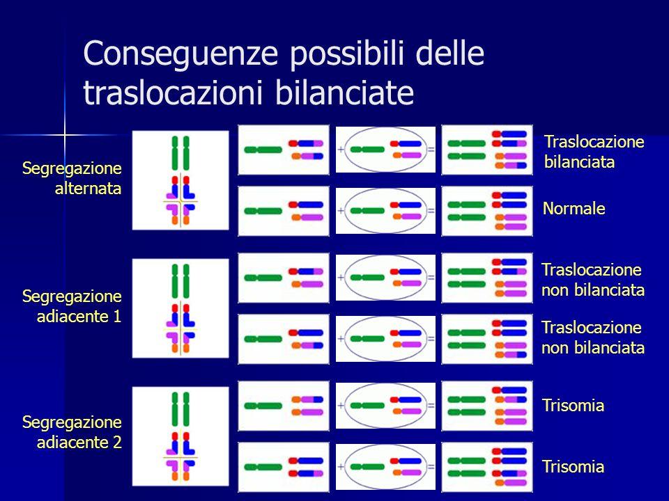 Conseguenze possibili delle traslocazioni bilanciate Traslocazione bilanciata Normale Traslocazione non bilanciata Trisomia Segregazione alternata Seg