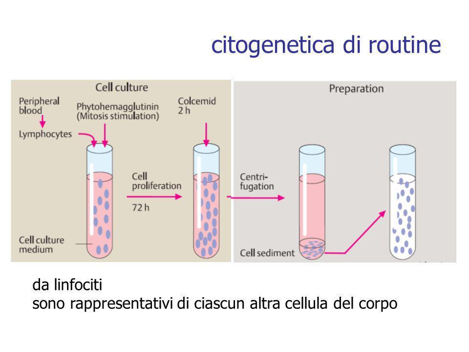citogenetica di routine da linfociti sono rappresentativi di ciascun altra cellula del corpo