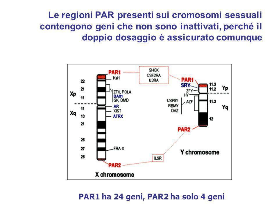 Le regioni PAR presenti sui cromosomi sessuali contengono geni che non sono inattivati, perché il doppio dosaggio è assicurato comunque PAR1 ha 24 gen