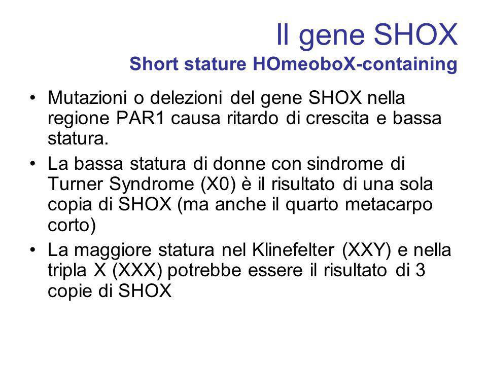 Il gene SHOX Short stature HOmeoboX-containing Mutazioni o delezioni del gene SHOX nella regione PAR1 causa ritardo di crescita e bassa statura. La ba