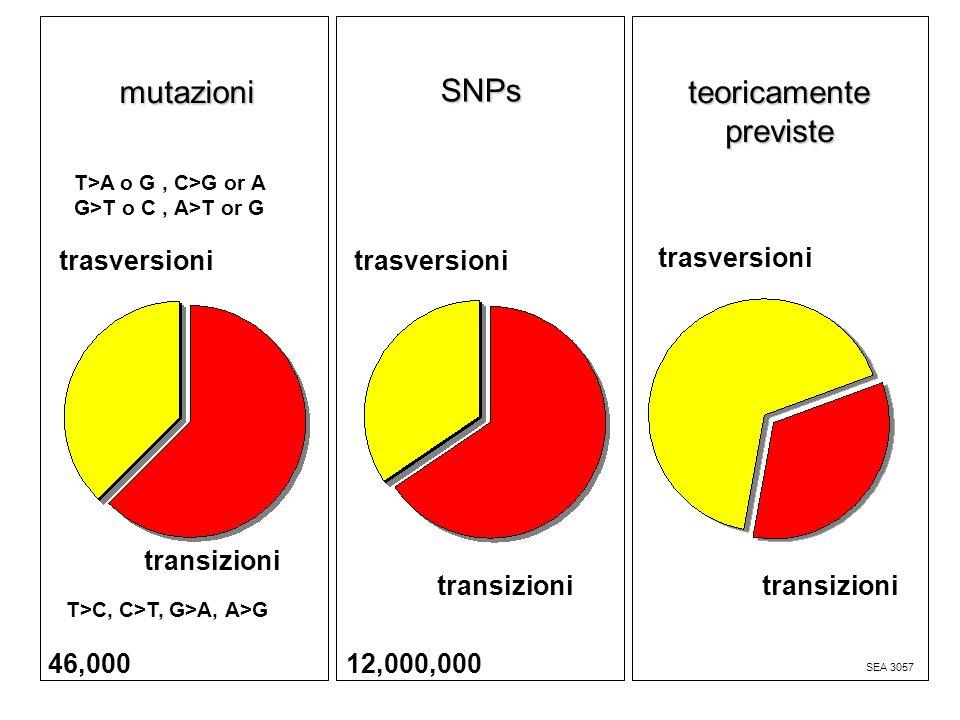 mutazioni teoricamente previste SEA 3057 trasversioni T>C, C>T, G>A, A>G T>A o G, C>G or A G>T o C, A>T or G transizioni SNPs 12,000,000 46,000 transizioni trasversioni