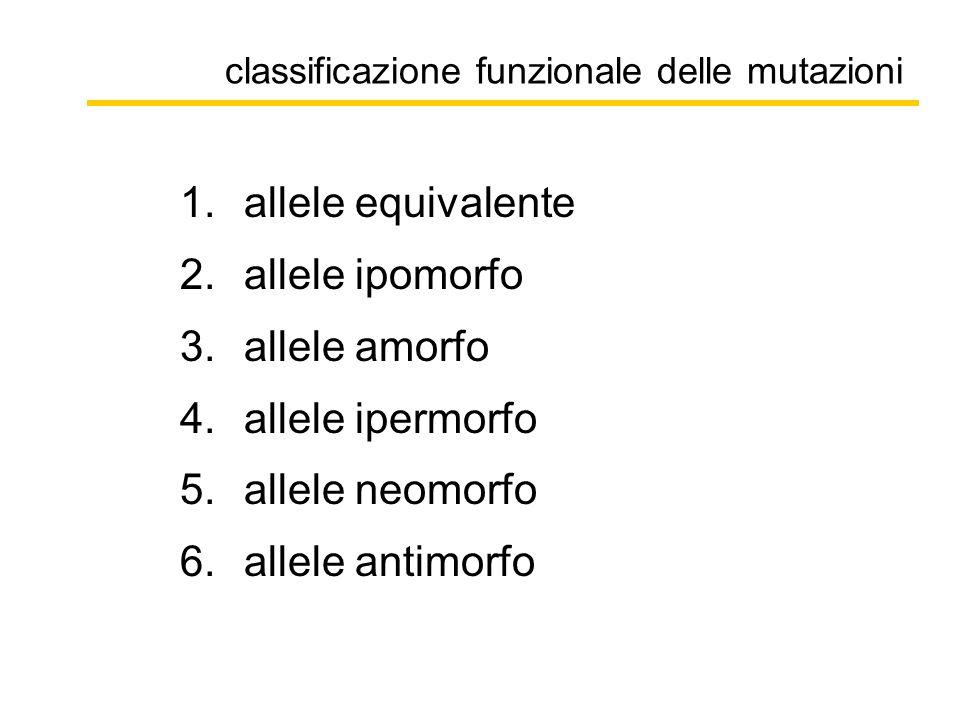 classificazione funzionale delle mutazioni 1.allele equivalente 2.allele ipomorfo 3.allele amorfo 4.allele ipermorfo 5.allele neomorfo 6.allele antimorfo