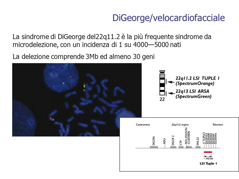 DiGeorge/velocardiofacciale La sindrome di DiGeorge del22q11.2 è la più frequente sindrome da microdelezione, con un incidenza di 1 su 40005000 nati La delezione comprende 3Mb ed almeno 30 geni