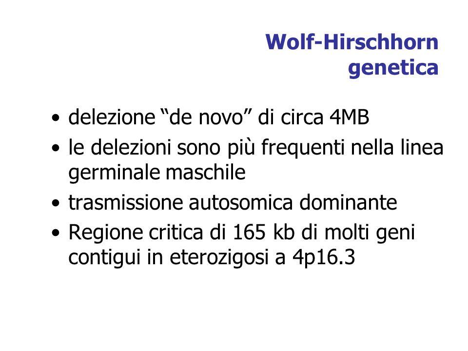 Wolf-Hirschhorn genetica delezione de novo di circa 4MB le delezioni sono più frequenti nella linea germinale maschile trasmissione autosomica dominante Regione critica di 165 kb di molti geni contigui in eterozigosi a 4p16.3