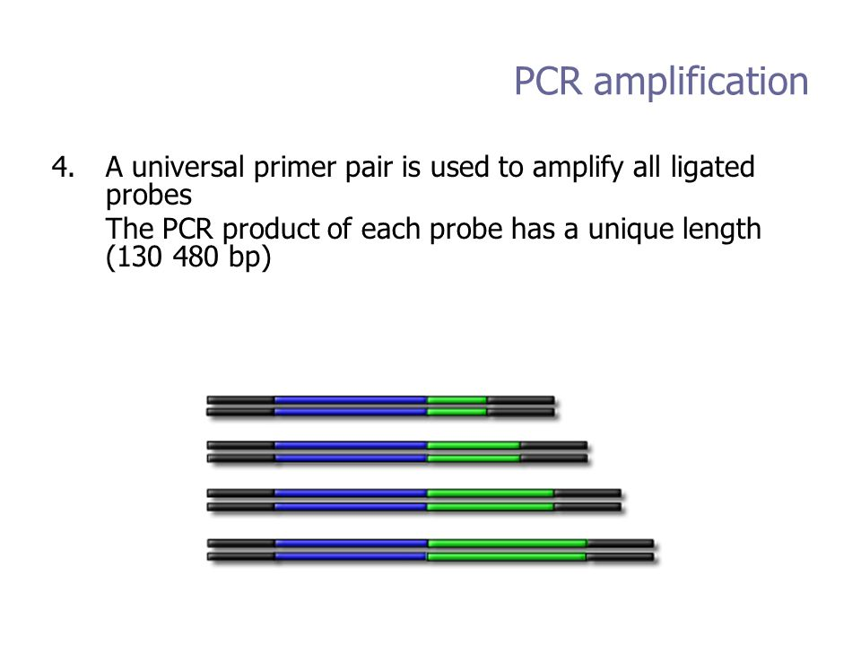 PCR amplification 4.A universal primer pair is used to amplify all ligated probes The PCR product of each probe has a unique length (130 480 bp)