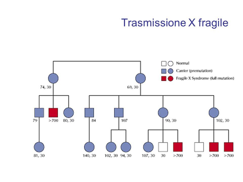 Trasmissione X fragile