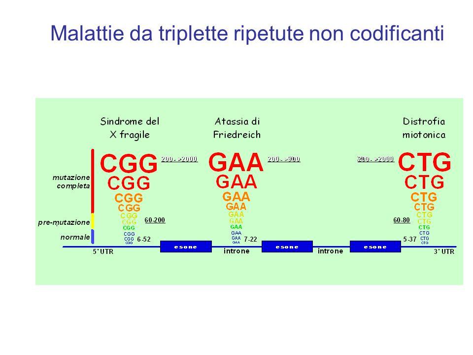Malattie da triplette ripetute non codificanti