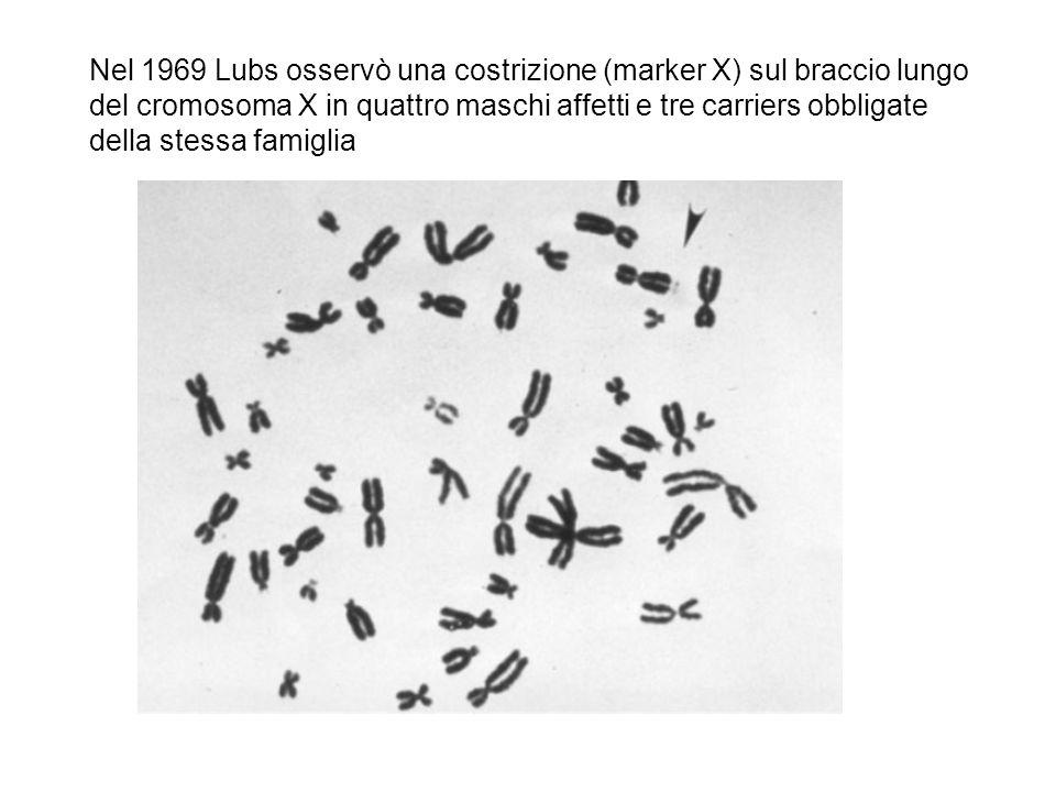 Nel 1969 Lubs osservò una costrizione (marker X) sul braccio lungo del cromosoma X in quattro maschi affetti e tre carriers obbligate della stessa fam
