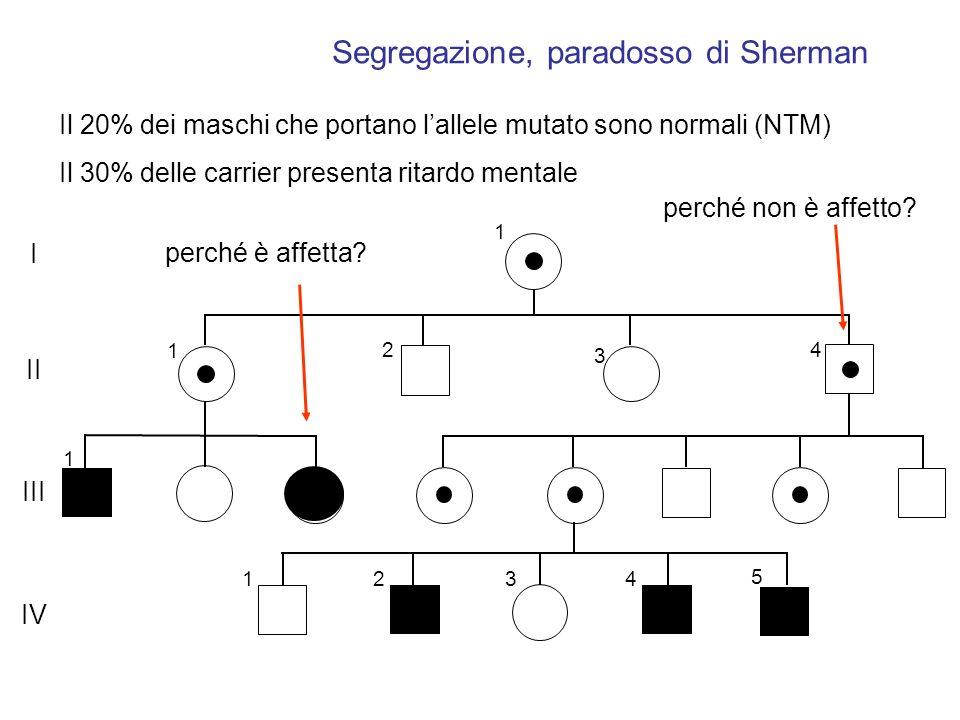 1 1 2 3 4 1 1234 5 I II IV III Segregazione, paradosso di Sherman perché non è affetto? perché è affetta? Il 20% dei maschi che portano lallele mutato