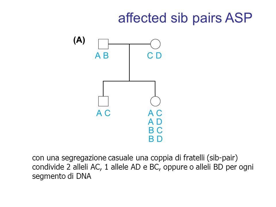 con una segregazione casuale una coppia di fratelli (sib-pair) condivide 2 alleli AC, 1 allele AD e BC, oppure o alleli BD per ogni segmento di DNA affected sib pairs ASP
