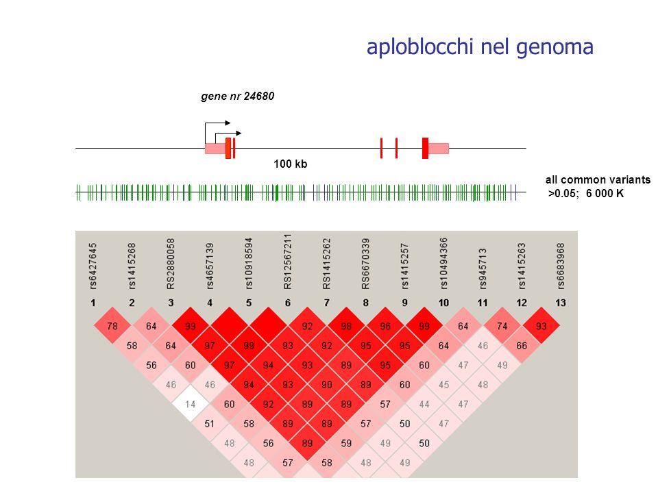 aploblocchi nel genoma all common variants >0.05; 6 000 K gene nr 24680 100 kb