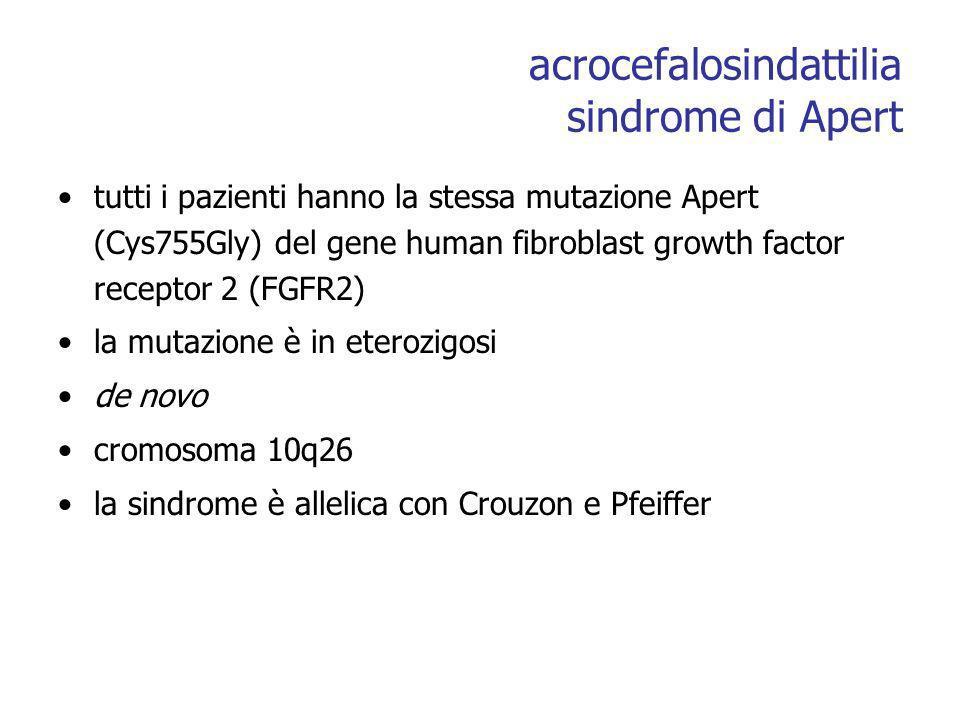 acrocefalosindattilia sindrome di Apert tutti i pazienti hanno la stessa mutazione Apert (Cys755Gly) del gene human fibroblast growth factor receptor 2 (FGFR2) la mutazione è in eterozigosi de novo cromosoma 10q26 la sindrome è allelica con Crouzon e Pfeiffer