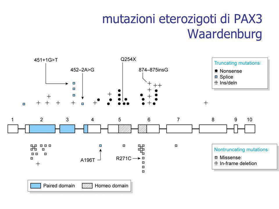 mutazioni eterozigoti di PAX3 Waardenburg