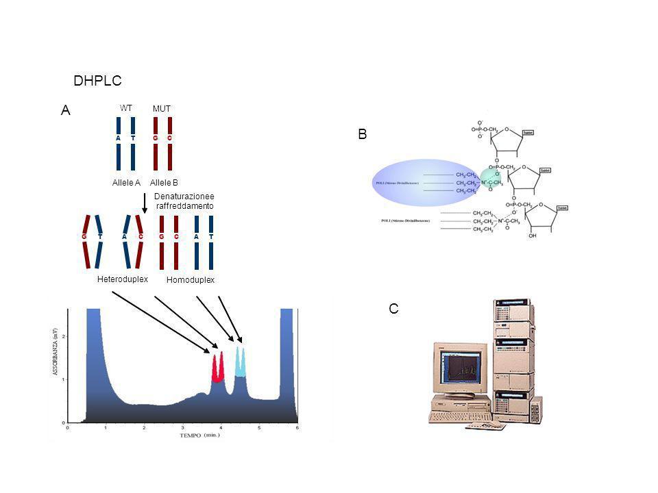 DHPLC CGTA AlleleA B TACG GCAT Denaturazionee raffreddamento MUT WT Heteroduplex Homoduplex A B C
